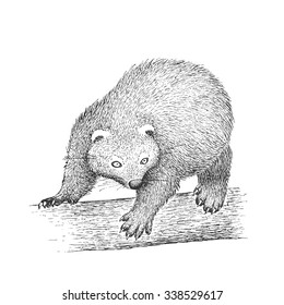 Binturong on the Tree - Classic Drawn Ink Illustration Isolated on White Background