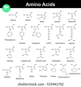 Biogenic amino acids, molecular structures, 2d chemical vector illustration isolated on white background, eps 8
