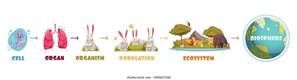 Biological hierarchy infographics scheme from cell and organ to ecosystem and biosphere cartoon vector illustration