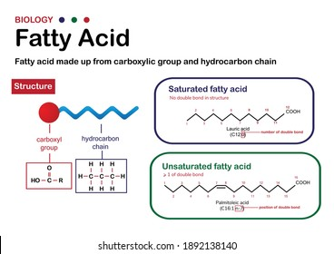 Biology diagram present structure and type of fatty acid. Carboxyl group, saturated and unsaturated fatty acid.