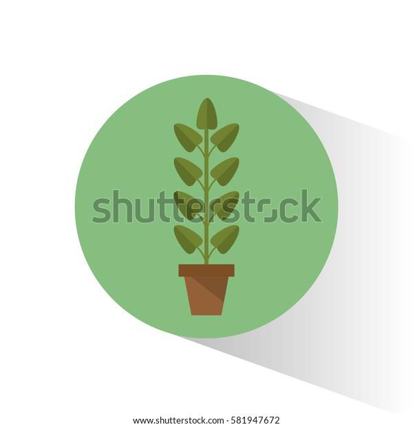 biology plant pot school