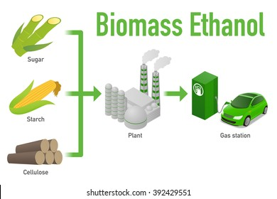 Biomass ethanol, made form Sugar, Starch, Cellulose,  diagram illustration