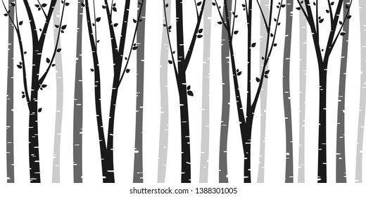 Birch or aspen tree forest design. Seamless vector background with birch forest. Interior wall decoration.