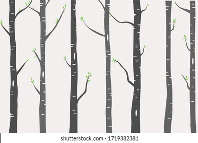Birch or Aspen Trees with green leaves illustration