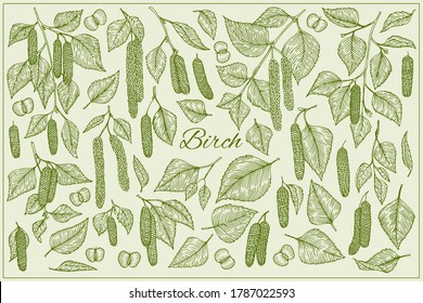 Birch branch with catkins leaves, flowers and seeds. Vector isolated illustration. Sketch elements set.