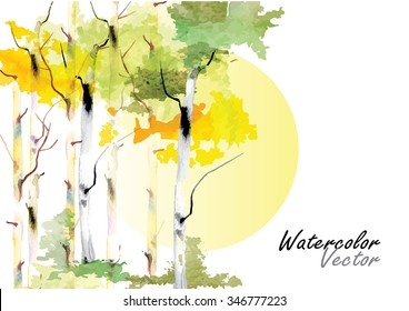 birch forest with the sun  in autumn vector brush watercolor  hand drawn