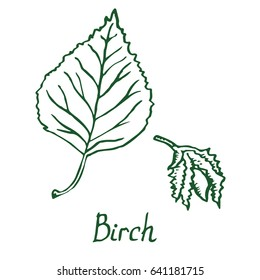 Birch Leaf and flower (seed), hand drawn doodle, sketch in pop art style, vector illustration