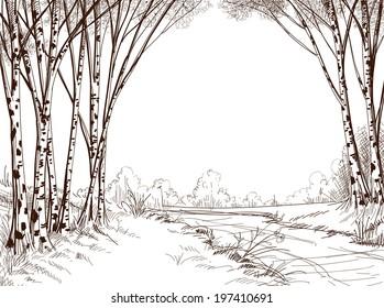 Birch tree forest, graphic background