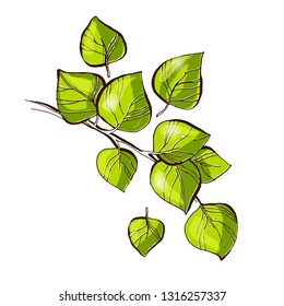 Birch tree green branch with leafs vector illustration, hand drawn line art, green leafs doodle