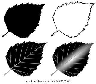 birch,  vector, isolated birch leaf,