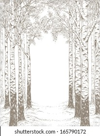 Birch wood, hand drawn illustration in vintage style with free space for your text.