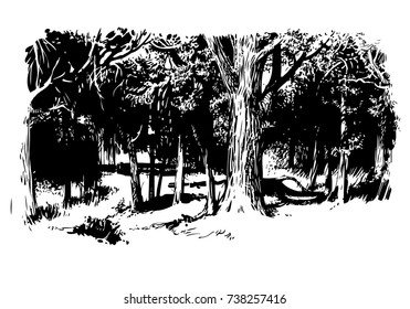 birchwood, vector, black-and-white computer graphics, drawing a feather, a picturesque sketch, EPS, a background for wall-paper both for printing and on fabric