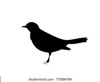 Bird blackbird black silhouette on white background, vector, eps 10