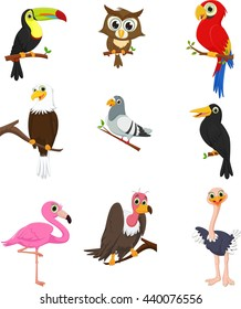 Bird cartoon collection