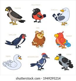 Bird characters design collection. Cartoon animals set. Crow, parrot, bullfinch, falcon, woodpecker, owl, swan, seagull, swallow.