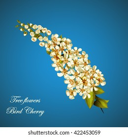 Bird cherry tree illustration.  Can be used as design element in background, greeting cards, covers, etc. Vector stock.