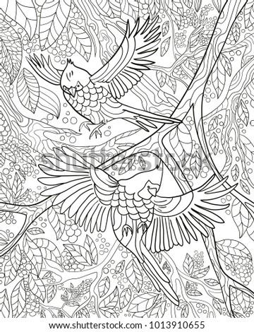 Bird Color Book Vector Black White Stock Vector (Royalty Free ...