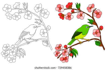 Bird coloring book isolated on white with colored example. Japanese White Eye bird sitting on sakura branch with blossom pink flowers.