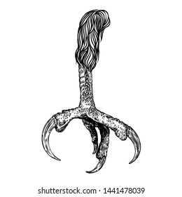 Bird eagle feet, stylized drawing. Decorative drawn crow foot. Hawk leg totem, magic spells supplies. Black and white drawing by hand. Witchcraft ritual, voodoo, attribute. Illustration for Halloween.