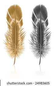 bird feather isolated on white background - vector illustration