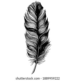 Bird feather from wing isolated. Isolated illustration element. Vector feather for background, texture, wrapper pattern, frame or border.