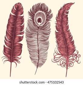 Bird Feathers. Hand drawn engraving. Vector vintage illustration. Isolated on color background. 8 EPS