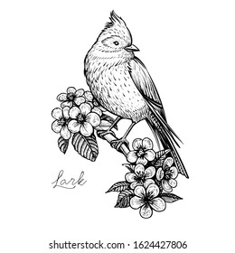 Bird and flowers, vintage hand drawn vector illustration. Sitting spring bird on the blooming cherry branch. Isolated black floral element on white background.