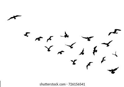 Bird flying silhouette over sky background. Animal wildlife skyline