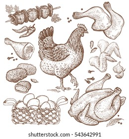 Bird and food objects. Sketch of poultry hen. Split carcass of chicken, wings, legs, skewers of chicken, nuggets, basket eggs isolated on white background. Style Vintage engraving. Hand drawing Vector
