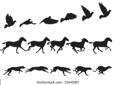 Bird, horse and dog in motion. See #32154229 for more sequences