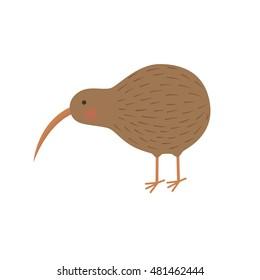 bird kiwi illustration for the children