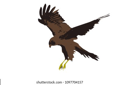 Bird landing. Hawk vector image.