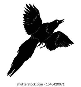 Bird magpie, black and white silhouette