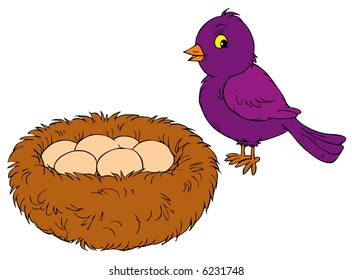 Bird, nest and eggs