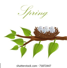 Bird nest on the tree branch. Spring is coming! Vector illustration