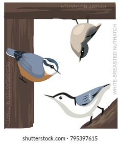 Bird Nuthatch Set Cartoon Vector Illustration