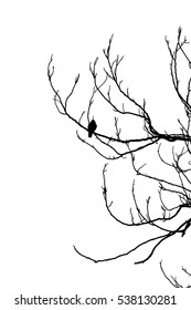 Bird on Dry Tree in Pen and Pencil drawing Vector