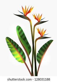Bird of Paradise flower isolated over white background. EPS10 file version. This illustration contains transparencies and is layered for easy manipulation and custom coloring
