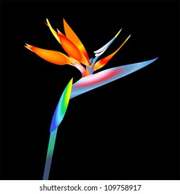 bird of paradise flower, vector