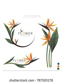 The Bird of Paradise flower vector logo background