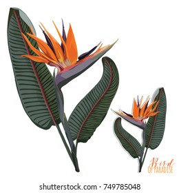 Bird Of Paradise Flowering with Leaves Plant Clip Art