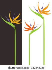 Bird of paradise. Isolated flowers on white and black background. Vector illustration