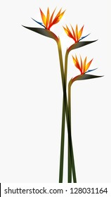 Bird of Paradise transparent flower isolated over white background. EPS10 file version. This illustration contains transparencies and is layered for easy manipulation and custom coloring