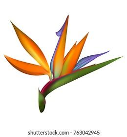 Bird of Paradise tropical flower. 3d vector flower illustration. Strelitzia isolated on white.