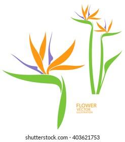 Bird of paradise. Tropical flower. Vector illustration