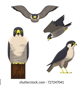 Bird Peregrine Cartoon Vector Illustration