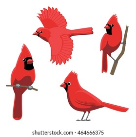 Bird Poses Northern Cardinal Vector Illustration