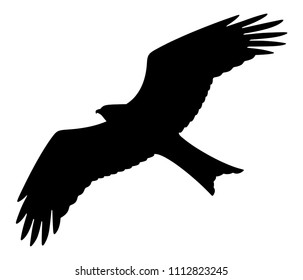 Bird of prey silhouette on white background, vector illustration