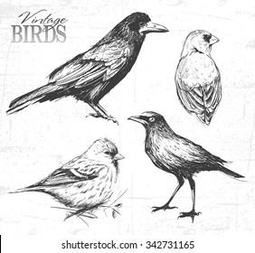 Bird set, hand-drawn illustration. See also other animals