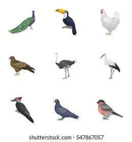 Bird set icons in cartoon style. Big collection of bird vector symbol stock illustration